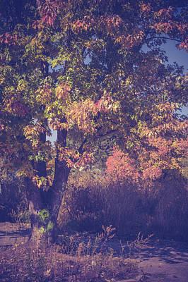 Photograph - Autumnal Nostalgia by Jenny Rainbow