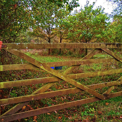 Photograph - Autumnal Orchard by Anne Kotan