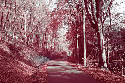 Photograph - Autumnal Path by Jenny Rainbow