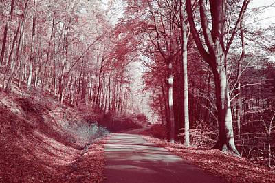 Photograph - Autumnal Path by Jenny Rainbow