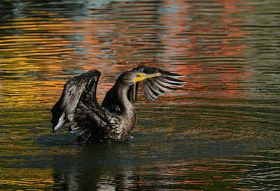 Photograph - Autumnal Reflections 2 by Fraida Gutovich