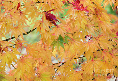 Photograph - Autumnal Shades by Tim Gainey