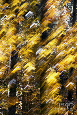 Priska Wettstein Land Shapes Series - Autumnal show by Yuri San