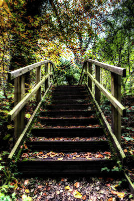 Photograph - Autumnal Steps by Nick Bywater