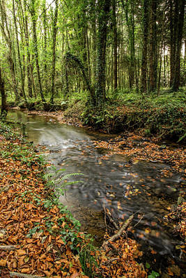 Photograph - Autumnal Stream by Martina Fagan
