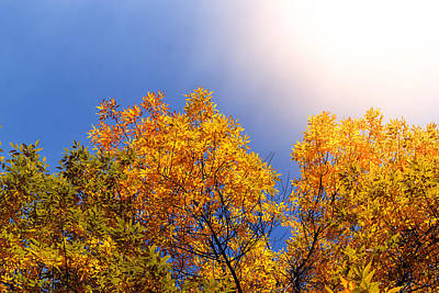 Photograph - Majestic Autumnal Flare by John Williams