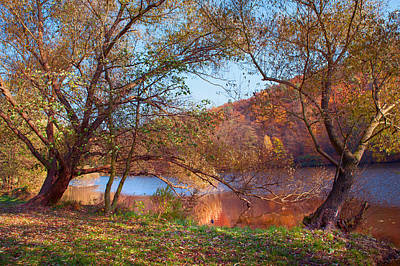 Willow Lake Photograph - Autumnal Trees By The Lake by Jenny Rainbow