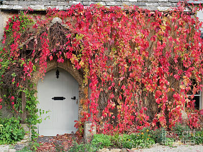 Photograph - Autumnal Virginia Creeper by Tim Gainey