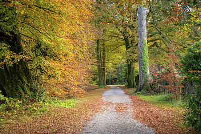Photograph - Autumnal Walkway by Martina Fagan