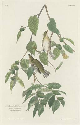 Wings Drawing - Autumnal Warbler by Dreyer Wildlife Print Collections