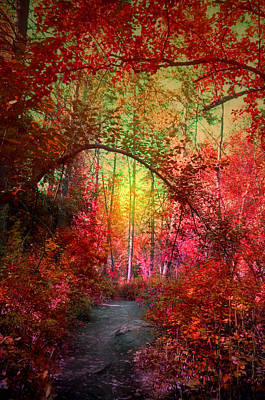Photograph - Autumn's Archway by Tara Turner