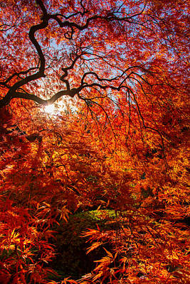 Photograph - Autumn's Beauty by Kunal Mehra