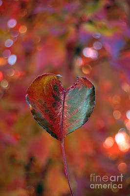 Photograph - Autumn's Bold Heart by Debra Thompson