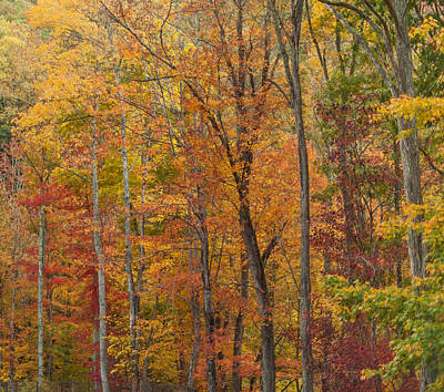 Photograph - Autumn Canvas by Terry DeLuco