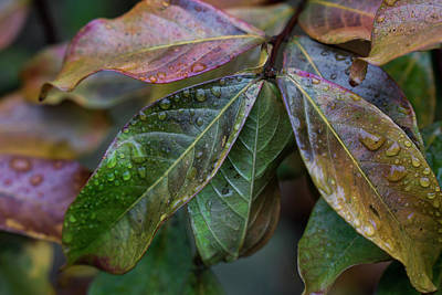 Photograph - Autumn's Cold Rain by Steve Gravano