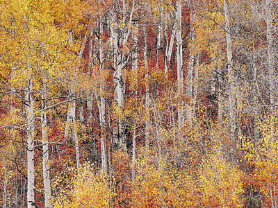 Photograph - Autumns Colorful Hues by Leland D Howard