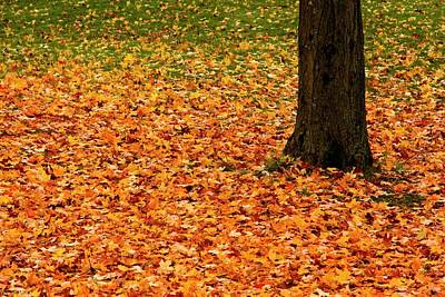 Photograph - Autumn's Dancing Carpet  by Hany J