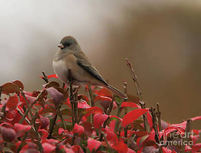 Photograph - Autumn's Dark-eyed Junco by Elizabeth Winter