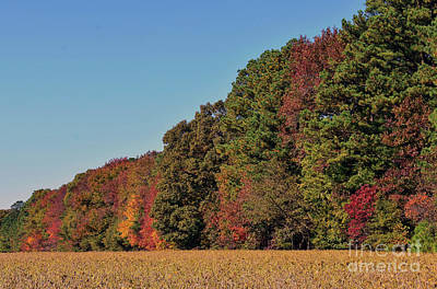 Photograph - Autumn's Edge by Skip Willits