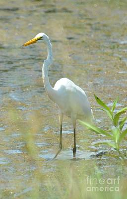 Photograph - Autumn's Egret by Maria Urso