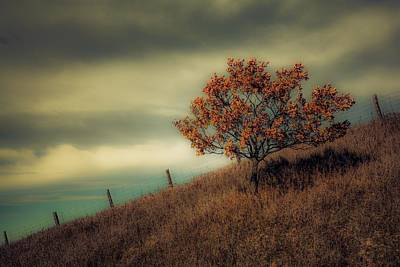 Photograph - Autumns End by Karl Anderson
