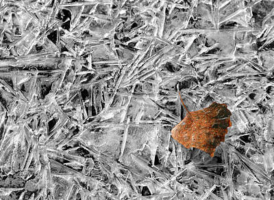 Photograph - Autumn's End by Marie Leslie