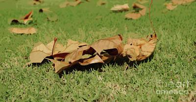 Photograph - Autumn's Fallen by Cassandra Buckley