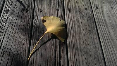 Photograph - Autumn's First Fall by Liza Eckardt