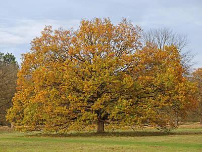 Photograph - Autumn's Glory by Gill Billington