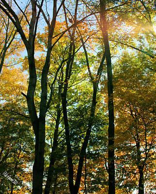 Autumns Glory Art Print