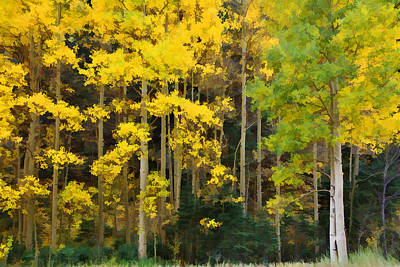 Photograph - Autumn's Gold by Diane Alexander