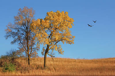 Photograph - Autumn's Gold by Nikolyn McDonald