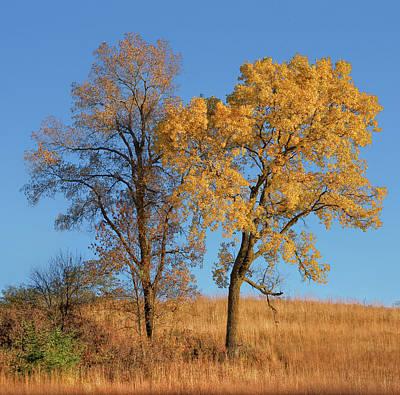 Photograph - Autumn's Gold - No 1 by Nikolyn McDonald