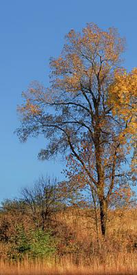 Photograph - Autumn's Gold  - No 2 by Nikolyn McDonald