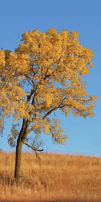 Photograph - Autumn's Gold - No 3 by Nikolyn McDonald