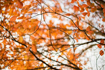 Photograph - Autumn's In The Air by Kunal Mehra
