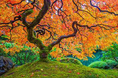 Autumn's Jewel Art Print by Patricia Davidson