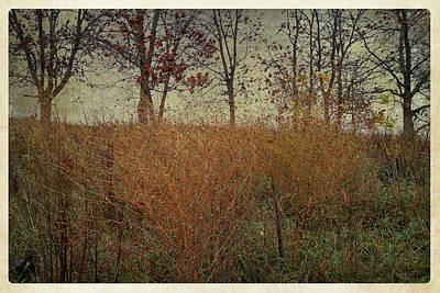 Photograph - Autumn's Last Gasp by Scott Kingery