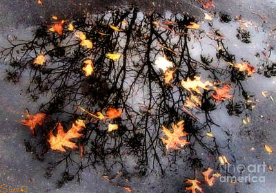 Photograph - Autumns Looking Glass 1 by September  Stone