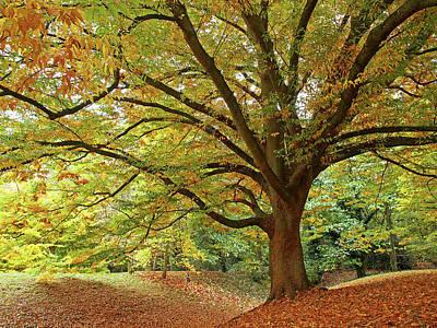 Photograph - Autumn's Majesty by Gill Billington
