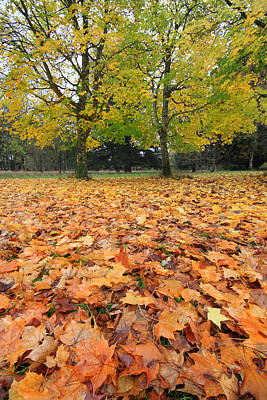 Photograph - Autumn's Red Carpet Nature Is The Star by Pierre Leclerc Photography
