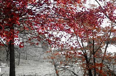 Digital Art - Autumn's Red Kiss by Susan Maxwell Schmidt