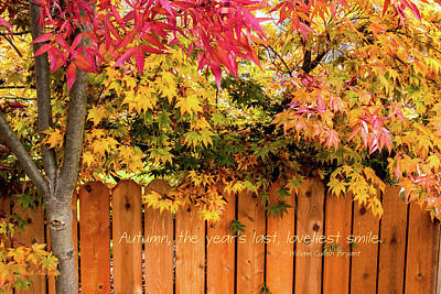 Photograph - Autumn's Smile by Mick Anderson
