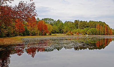 Photograph - Autumn's Splendor by Linda Brown