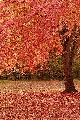 Photograph - Autumn's Splendor by Susan Rissi Tregoning