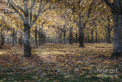 Photograph - Autumns Strokes by Bruno Santoro