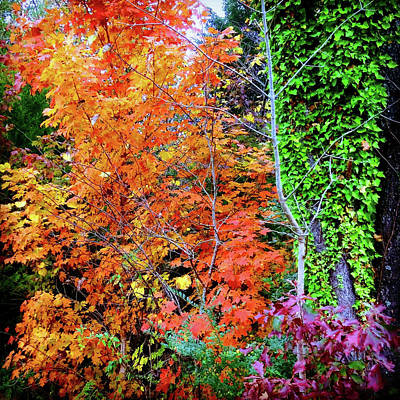 Photograph - Autumn's Vibrance by Rodney Lee Williams