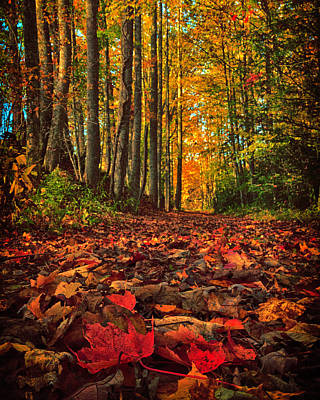 Photograph - Autumn's Walkway by Kevin Senter