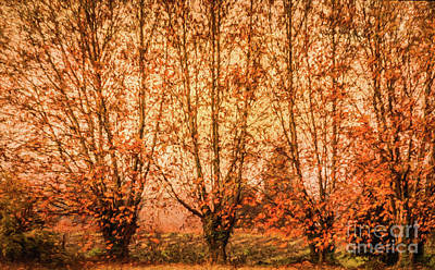 Textured Photograph - Autumn Trees In Provence by Robert Brown