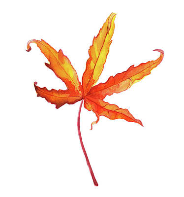 Maple Leaf Art Drawing - Autumt Maple Leaf by Ekaterina Efanova